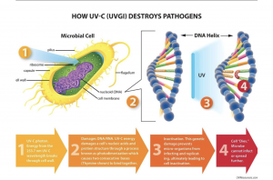 UV-C's Disinfecting Role in the COVID-19 Pandemic